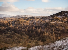Late sun turns tree tops golden in Little Langdale