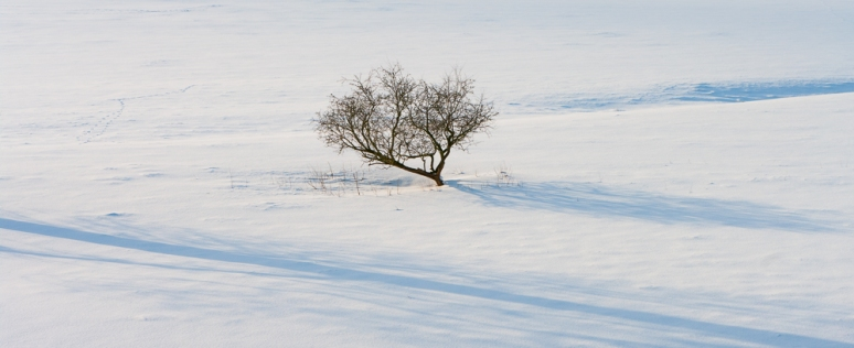 A stunted tree casts shadows in the snow in the Yorkshire Dales