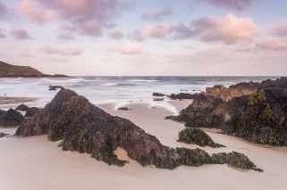 A pink dawn over the rocks of Whistling Sands on the Lleyn Peninsula