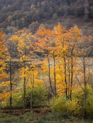 A portrait of trees at the peak of autumn colour at Yew Tree Tarn