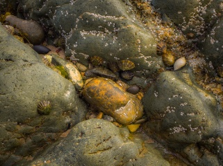 A close study of the multi-coloured rocks of Porth Or as the tide goes out