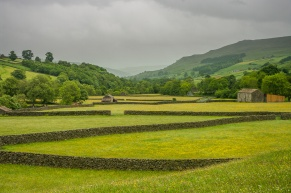 A typical Swaledale scene of fields, barns and flower-filled meadows