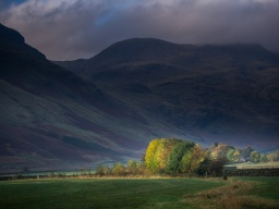 Trees catch the morning sun in Langdale, with Bowfell behind.
