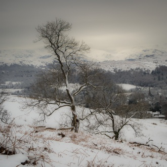 Delicate shapes of trees in snow on the slopes of Wansfell above Ambleside