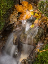 Golden leaves and miniature waterfall in the Lake District