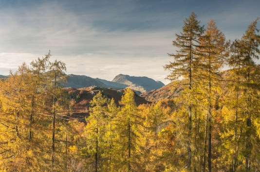 The full majesty of autumn with Bowfell in the distance