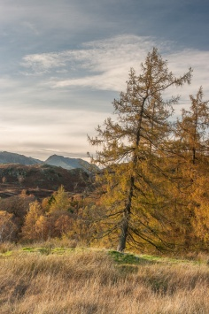 Golden trees near Skelwith Bridge with Bowfell in the distance