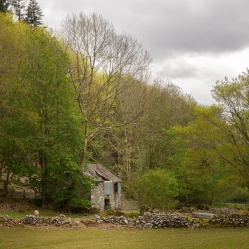 An old barn overshadowed by trees, Coed y Brenin forest, South Snowdonia