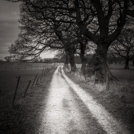 A lane beneath trees in Cheshire Farmland