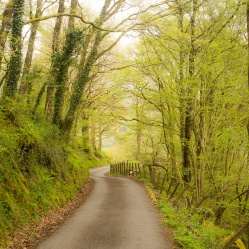 A green lane in spring near Coed y Brenin forest, South Snowdonia