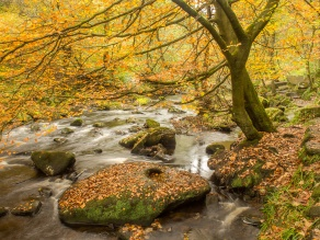 Hebden Water winds through the autumn woods near Hardcastle Crags