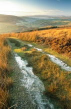Golden grass in afternoon sun on the track to Simon's Seat in Wharfedale