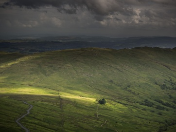 A tree is briefly lit by a shaft of sunlight near Kirkstone pass summit