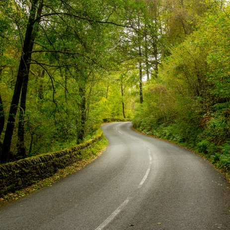 A winding road on the southern shore of Windermere in early autumn