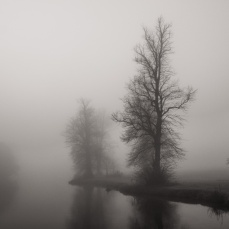 A winter fog in Berkshire on the River Lambourn