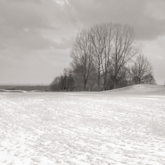 Snow and trees near Dunham Massey, Cheshire
