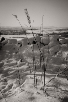 Old stems are delicately decorated by snow near Otley Chevin