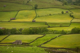 A patchwork of fields filled with summer flowers in Swaledale, near Muker