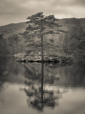 A lone tree casts its reflection in Tarn Hows, Lake District